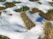Snow in the low desert